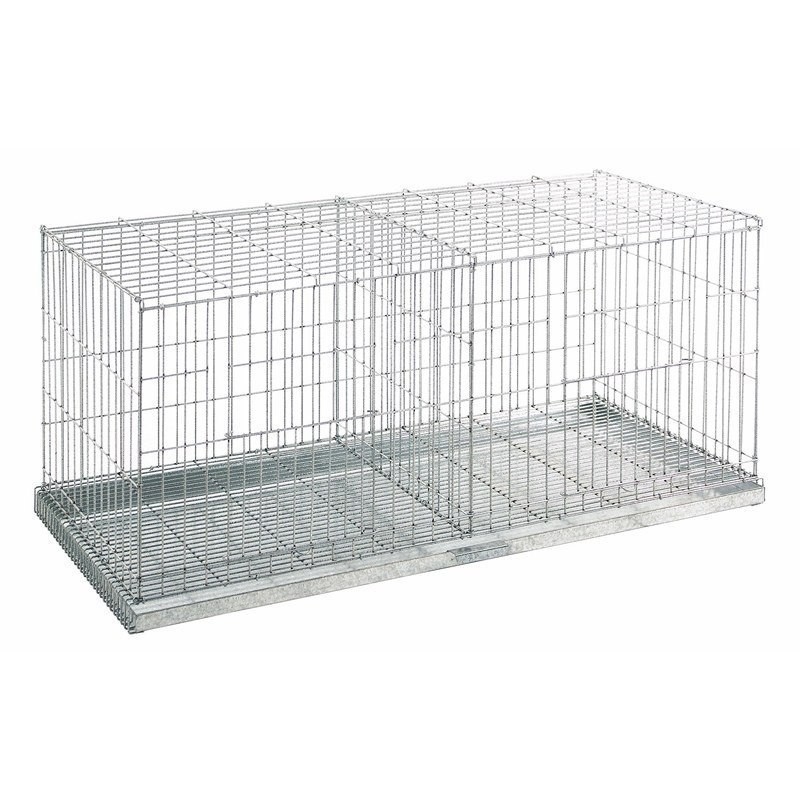 Pigeon exhibition cage 2 departments