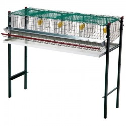 Quail battery cage 4 departments