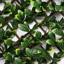 Celosía mimbre hojas de laurel