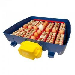 Incubadora automática Real 49 huevos interior