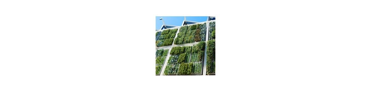 Vertical gardens, creating original environments and fresh